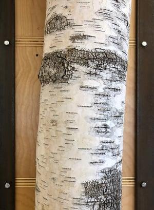 Birch Pole Detail