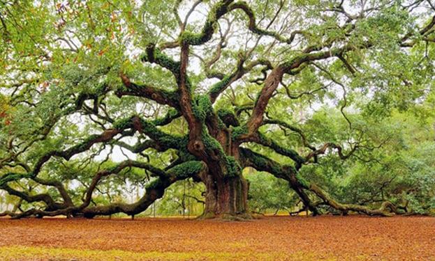 Tree header
